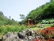 Du lịch Sapa ngắm hoa nở trong núi bốn mùa