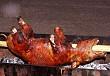Lợn Cắp Nách Ở Sapa