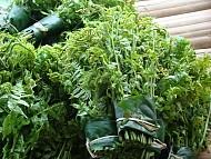 Những loại rau đặc sản của Sapa