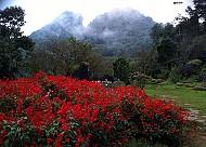 Thung Lũng Hoa Hồng ở Sapa