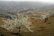 Tuyệt Vời Cao Nguyên Trắng Bắc Hà Lào Cai
