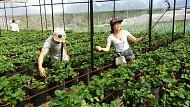 Việt Nam Với Sức Hút Từ Thị Trường Du Lịch Nông Nghiệp