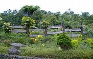 Vườn Quốc Gia Hoàng Liên Sapa