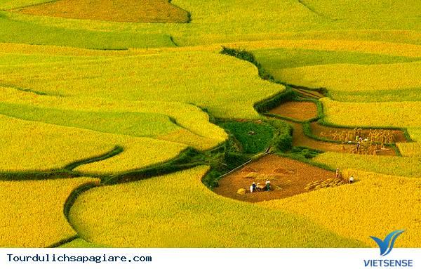 Ruộng Bậc Thang Ở Sapa